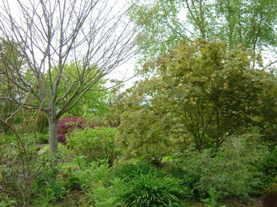 acer palmatum osakazuki (droite) et acer capilipes (gauche)